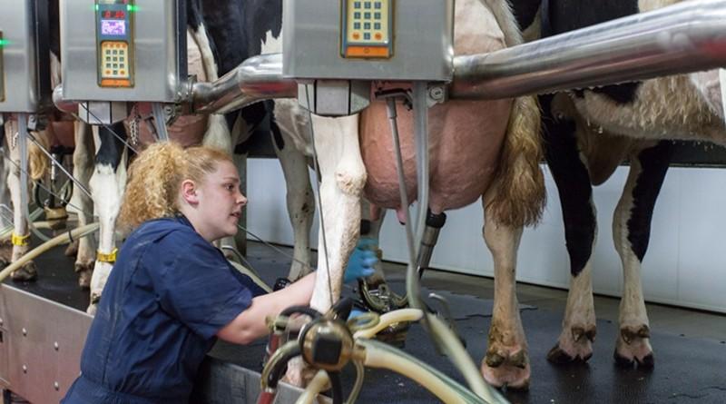 Цените на млякото скачат