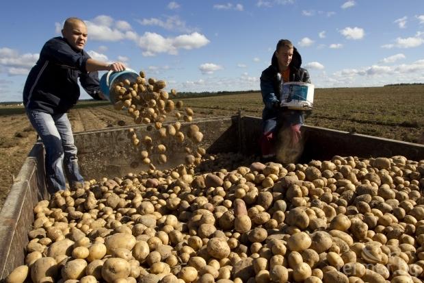 Земеделски избор доходи