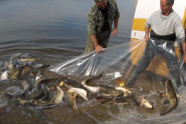 ЕС квота улов риба