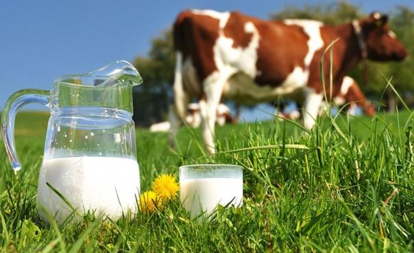 Намаляване на млякото субсидии