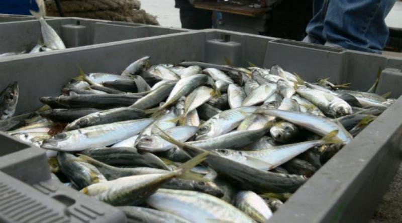 Рибарският бранш искания