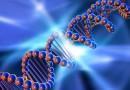 Създадоха растящ ДНК компютър