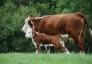 Животновъди от Родопите искат статут на семейни ферми