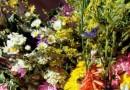 В България се добиват 17 хил. тона билки