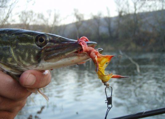 Разрешиха ribolov-na-shtuka