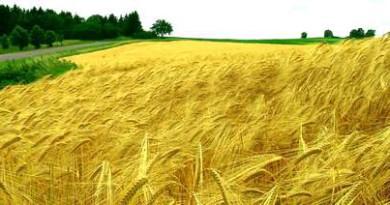 България и още четири държави не са освободили пазара на земя за купувачи от ЕС