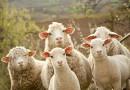 Колко  е  извънредната помощ за животновъдите?