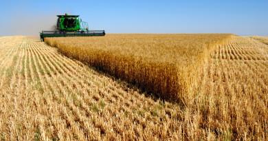 Рекордна реколта от пшеница: почти 6 млн. тона
