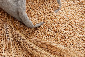 Резултат с изображение за пшеница