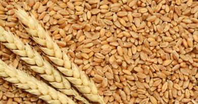 Цената на пшеницата се повишава