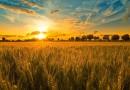 Нов доклад за земеделието в ЕС до 2030г.