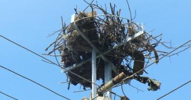 195 платформи за гнезда посрещат щъркелите