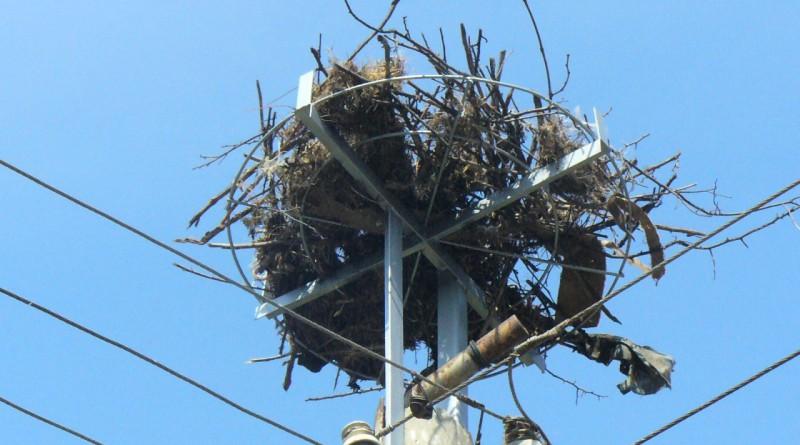 195 платформи гнезда