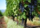 Близо 134 млн. евро за лозаро-винарския сектор от 2019 г.