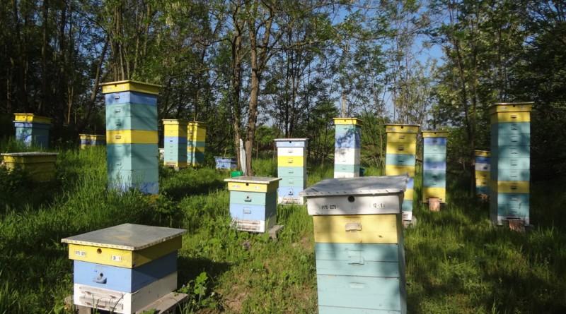 пчелинът пролет очакване