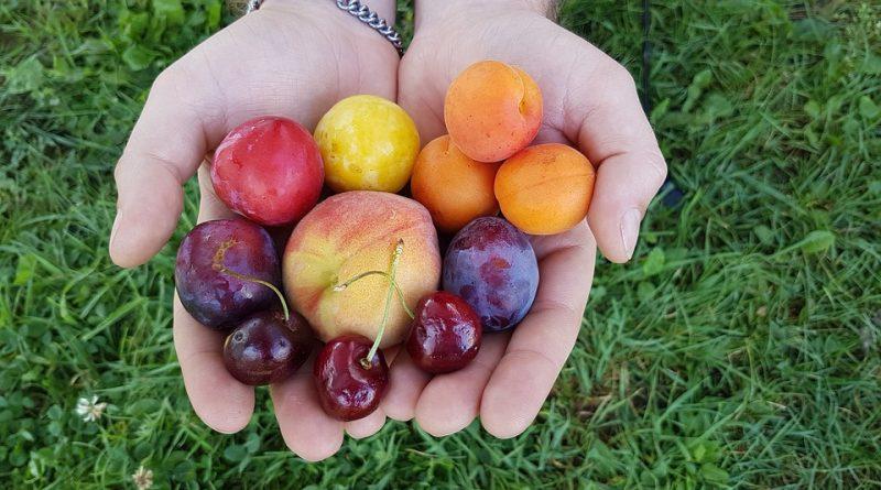 сливи, плодове, внос