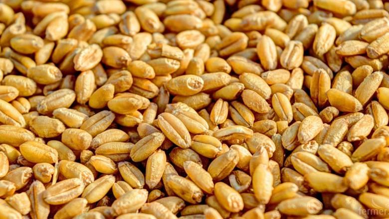 България е 11-та в света по износ на пшеница - Финансови новини