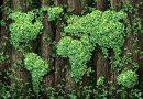България ще получи 1,3 милиарда за плавен преход към зелена икономика